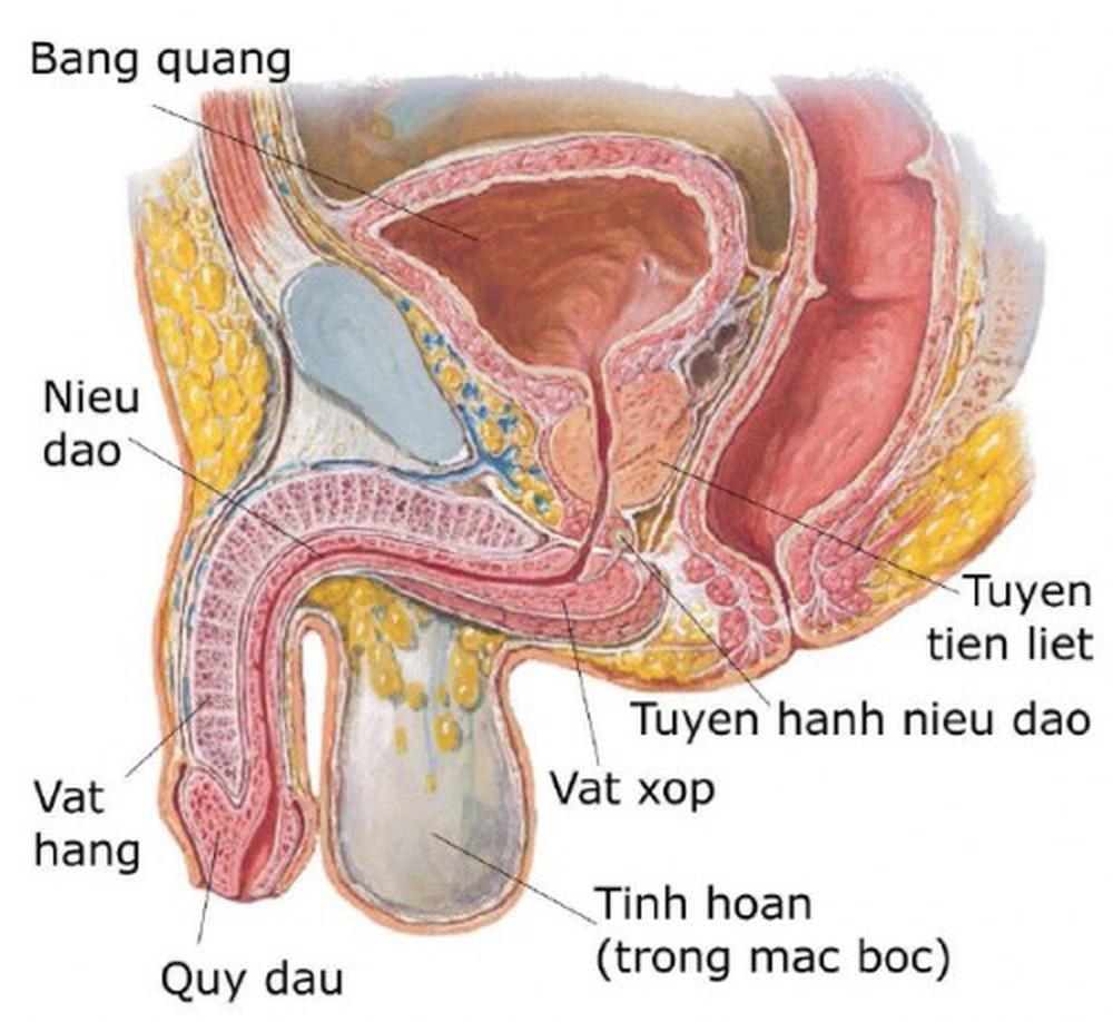 u nang tiền liệt tuyến và cách điều trị